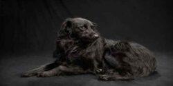تعبیر خواب دیدن سگ سیاه بزرگ در خواب چیست